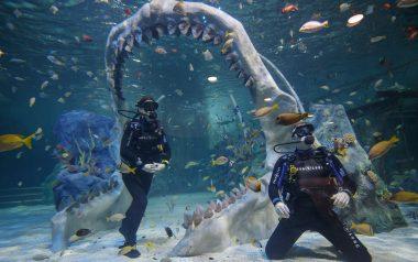 Ablenet.co.uk Shark Dive